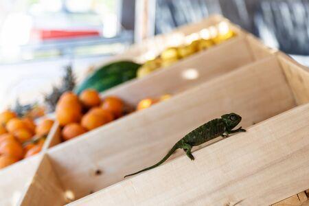 Green chameleon on the fruit Stock Photo