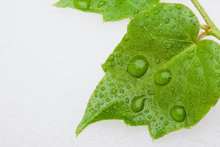 dewdrop: leaves with dewdrop