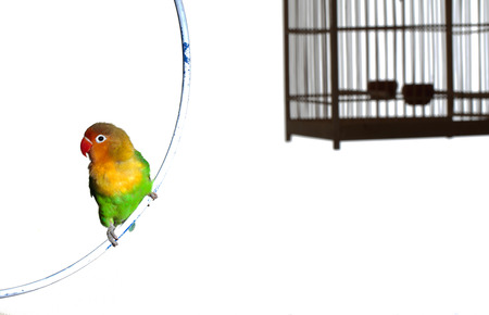 to remain dormant: Bird and birdcage Stock Photo
