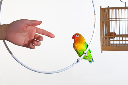 to remain dormant: Bird and birdcage with hand