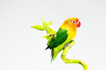 lucky bamboo: A bird on lucky bamboo