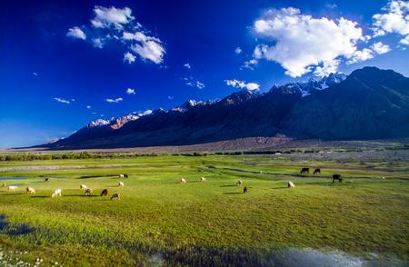 Xinjiang province Bayinbuluke Grassland and landscape, China