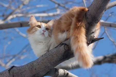 cat on a tree looking down against the sky photo