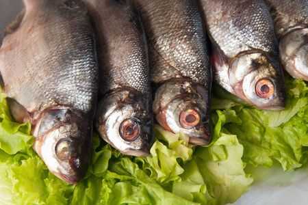 fresh-water fish close-up on green lettuce photo