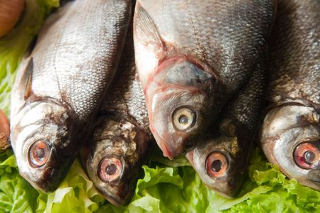 rio con peces: close-up de pescado fresco de r�o en verde lechuga