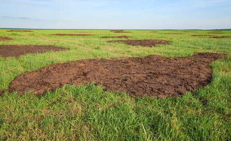 manure: domestic-animal manure on summer  field at farm  Stock Photo