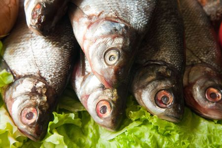 river fish: close-up of fresh river  fish  on green lettuce