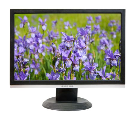 Lcd monitor with iris flowers. On screen my photo Stock Photo - 6647720