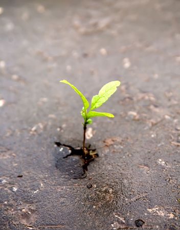 Young sprout makes the way through asphalt on city road. Stock Photo - 6857078