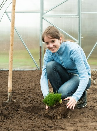 young woman resetting  sprouts in bed at hothouse photo