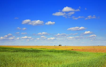 field of green grass and blue cloudy sky  Stock Photo - 7114951