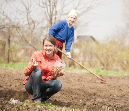 Two women checkrows set onion in bed at field photo