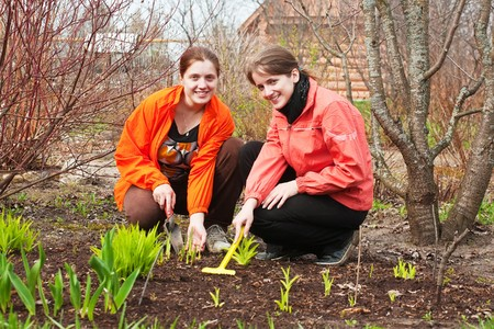 Two young women  resetting sprouts in bed at garden photo