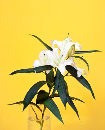 bouquet of white lily in vase over yellow  background Stock Photo - 7394573