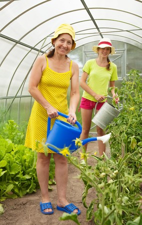 forcing bed:  women watering vegetables with  watering pot  in hothouse