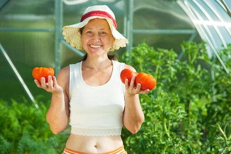 Senior woman is picking tomato in the hothouse photo