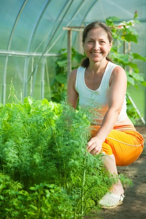 Smiling woman picking dill in the hothouse photo