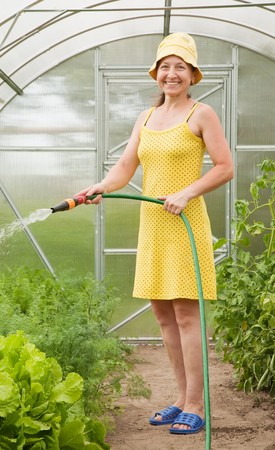 forcing bed: Senior woman watering vegetables plant with  in hothouse Stock Photo