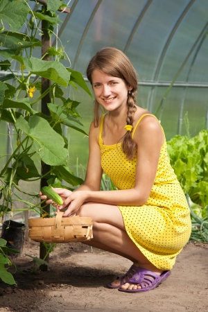 Smiling girl picking cucumber in the hothouse photo