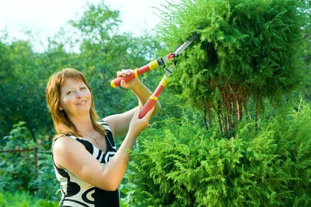 clippers: Mid adult woman cutting  thuja  in her garden