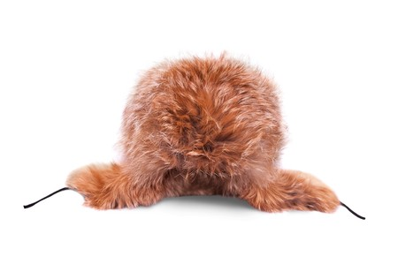 furskin: Fox hat with earflaps, isolated over white Stock Photo
