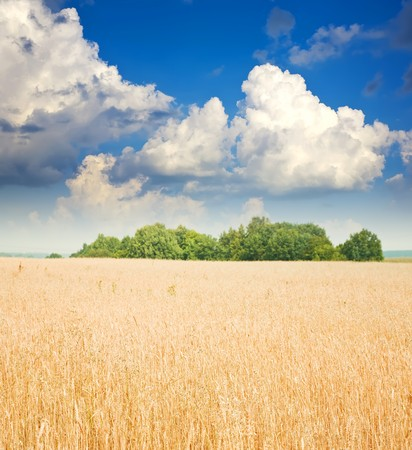 Landscape with cereals field under cloudy sky photo