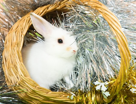 tawdry: Little white rabbit in basket against spangle on green