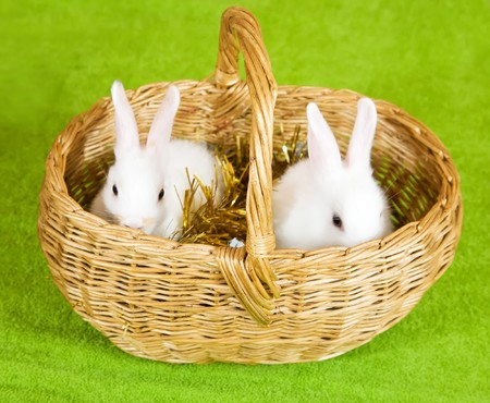 Two white rabbits in basket against tinsel on green Stock Photo