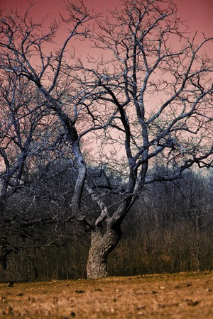 eerie landscape with tree during autumn dusk photo