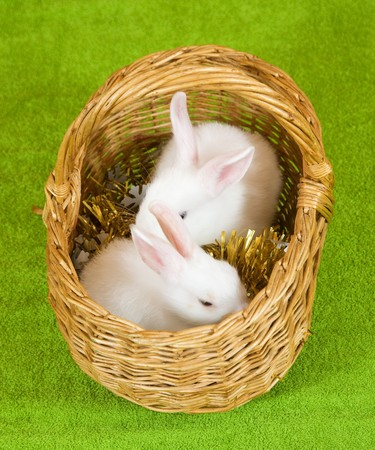 Two white rabbits in basket against trumpery on green