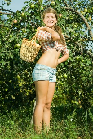picking fruit: young woman is picking of apples in the orchard Stock Photo