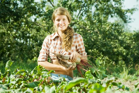 young girl is picking  beetroot in field photo