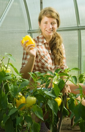 forcing bed: girl picking  green pepper  in the hothouse Stock Photo