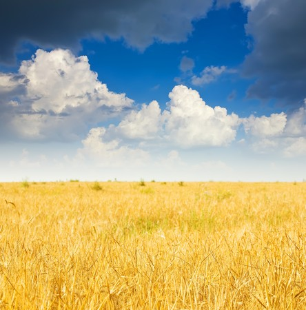 Summer landscape with  rye field and cloudy sky photo