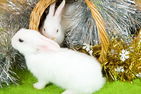 tawdry: Two white rabbits in basket against gaud on green