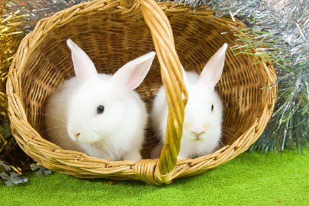 Two white rabbits in basket against spangle Stock Photo
