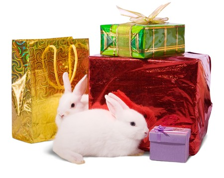 Two white rabbits with gifts. Isolated on white background  photo