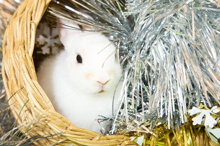 tawdry: white rabbits in basket against trumpery on green Stock Photo
