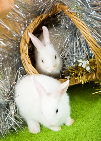 tawdry: Two white rabbits in basket against tinsel on green Stock Photo