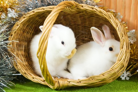 tawdry: Two white rabbits in basket against trumpery