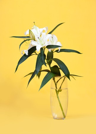 bouquet of white lily in vase over yellow  background Stock Photo - 7997405