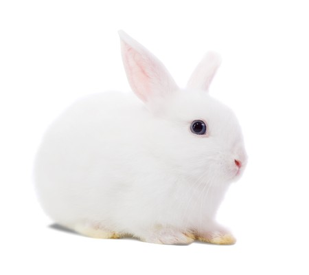 Little white rabbit. Isolated on white background  Stock Photo - 8000567