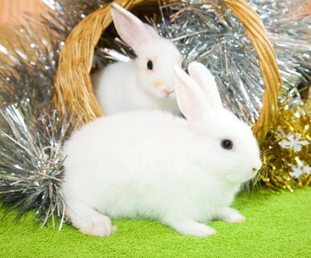 Two white rabbits in basket against spangle on green Stock Photo