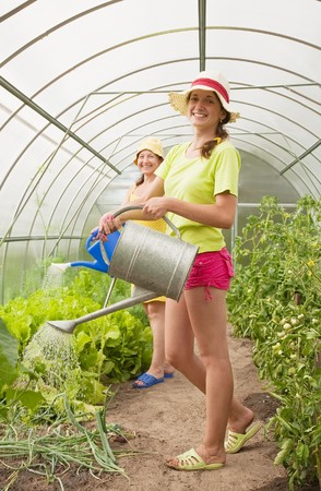 Women watering vegetables with watering can in hothouse photo