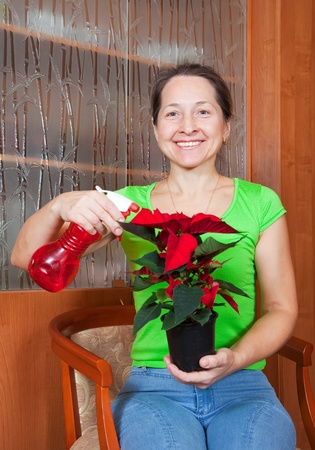 Mature woman with Christmas Star flowers in   pot at her home photo