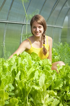 forcing bed: young girl is picking lettuce in the greenhouse
