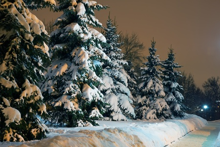 Spruce trees in winter park with shining lantern  photo