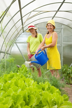 forcing bed: Women watering vegetables  with  watering pot in hot-house Stock Photo