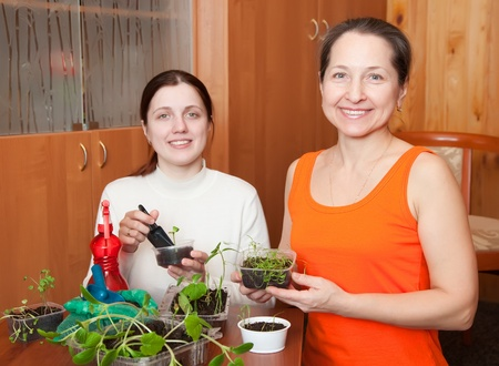 Two women with various seedlings at home photo
