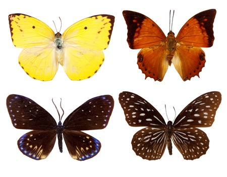 Set of exotic butterfly photo